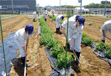 Rendering of the farm of Minamisoma-Fukko Agriculture Co., Ltd.