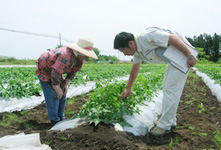 A Kagome staff member giving guidance on cultivation