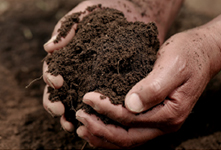 Farm soil rich in organic fertilizers