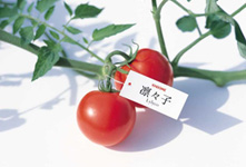 Lylyco, tomatoes for juice