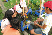 Children cultivating Lylyco as part of their learning activities