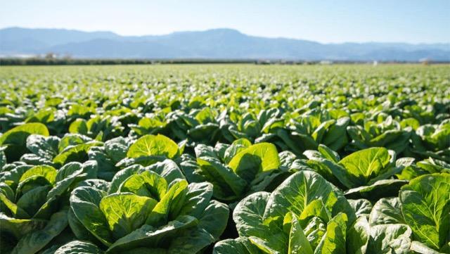 [如何选择蔬菜]无农药蔬菜和有机蔬菜的区别,和一个区别点
