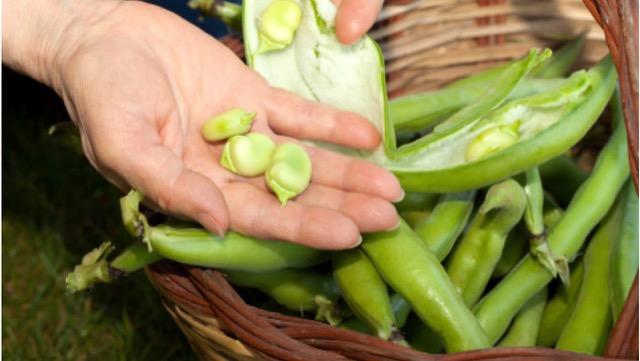 そら豆のおいしさを活かす食べ方