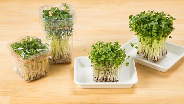 ブロッコリースプラウトの栄養を逃さない食べ方と、保存法は?