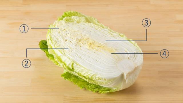白菜に適した調理方を、大きく4つの部位に分けてご紹介
