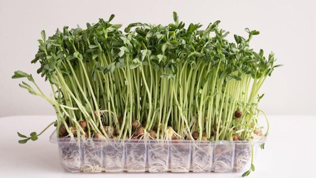 価格が安定している野菜で代用する