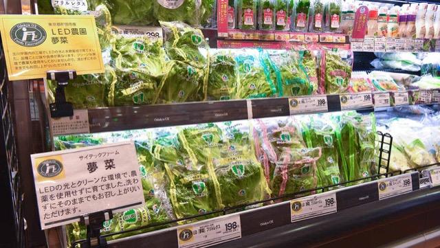 野菜工場で作られたさまざまな品種のレタス