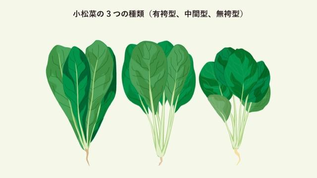 ほうれん草と小松菜の違いって?栄養素や種類を解説の画像
