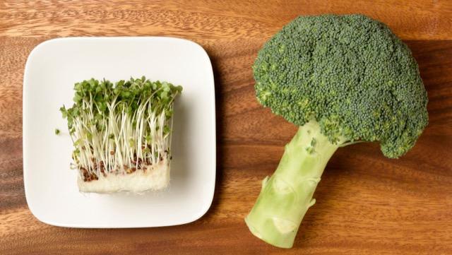 ブロッコリースプラウトとブロッコリーの特徴や栄養