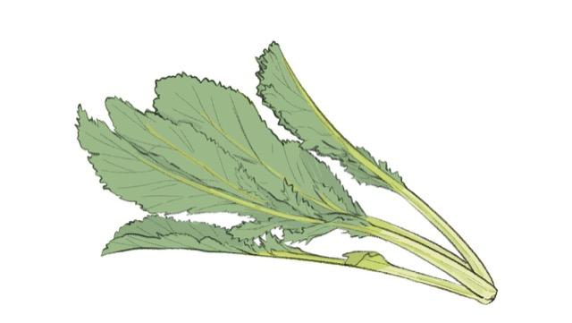 からし菜は葉や種に辛みがあり、種は和がらしの材料