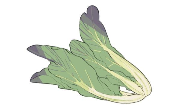高菜は九州全域で栽培され、地域ごとの品種がある