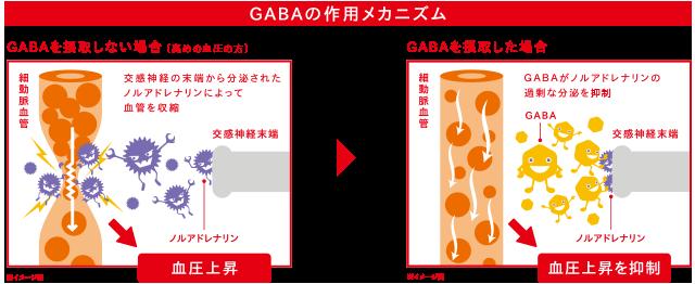 「GABA ガンマー 血圧」の画像検索結果